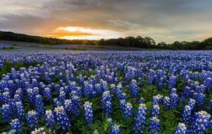 Crowley, TX